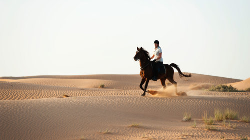 Desert Horse Riding at Mushrif Equestrian Park