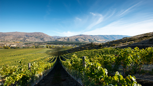 Central Otago Boutique Wine Full-Day Tour by Appellation Central Wine Tours