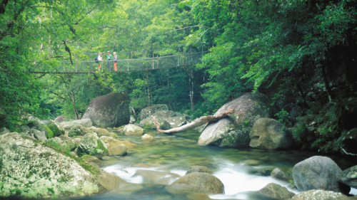 Daintree Walkabout Day Tour by Down Under Tours