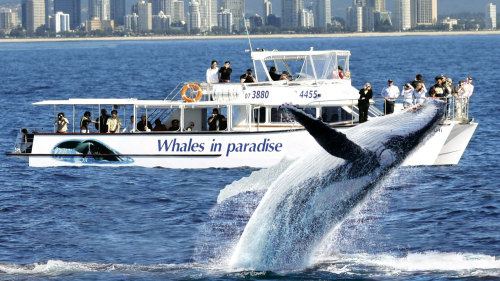 Whale Watching & Canal Cruise by Whales in Paradise