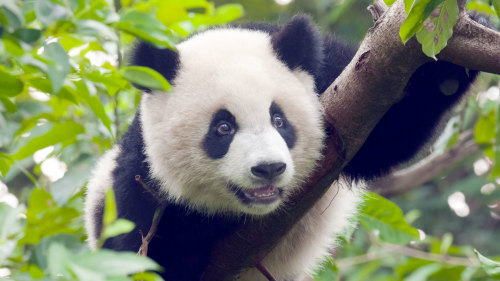 Guangzhou Day Trip with Giant Panda Encounter by Tour East