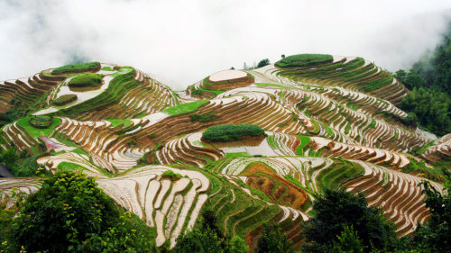 Longsheng Rice Terraces Private Tour with Lunch