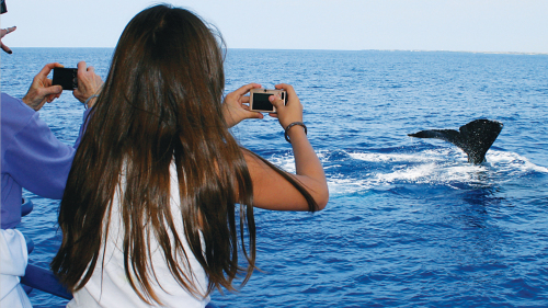 Whale Watching on a Glass-Bottom Boat