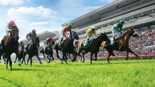 Horse Race Experience at Happy Valley Racecourse