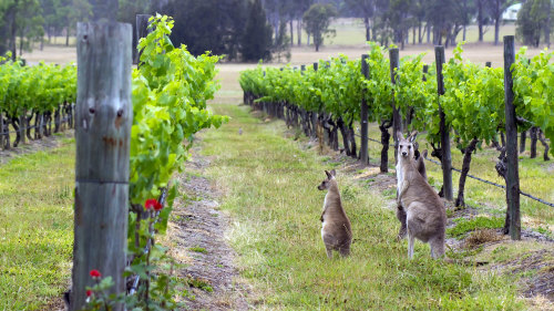 Hunter Valley Wineries Day Tour
