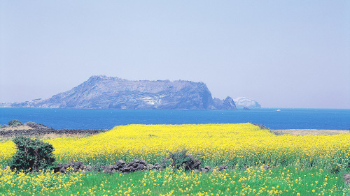 3-Day Jeju Island Tour