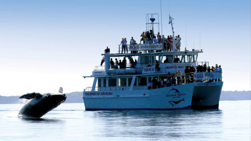 Jervis Bay Tour with Dolphin Watching Cruise by AAT Kings