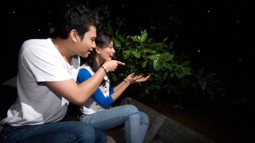 Private Fireflies Night Tour with Dinner by Tour & Incentive Travel