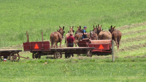 Private Lancaster & Amish Country Tour by Awfully Nice Tours