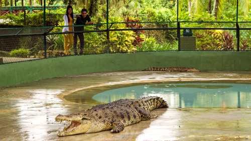Private Crocodile Farm & Underwater World Tour by Tour & Incentive Travel