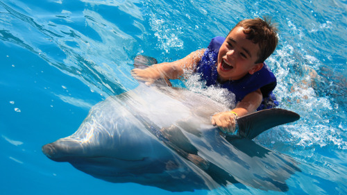 Up-Close Dolphin Encounter for Kids