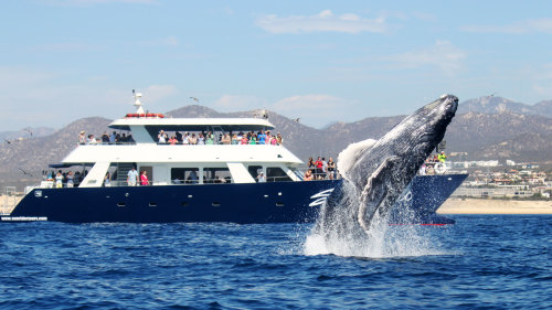 Whale-Watching Brunch Cruise
