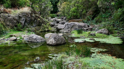 Rabacal Valley Walk Full-Day Tour