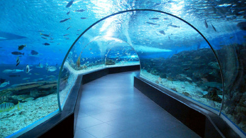 Half-Day City Tour & Manila Ocean Park by Baron Travel