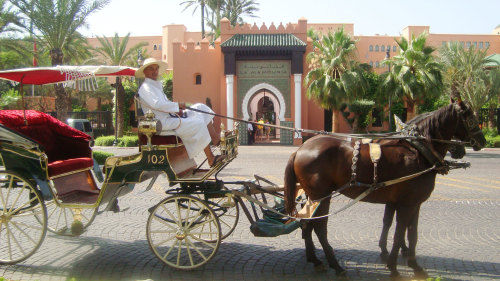 Gardens & Ramparts Tour by Horse-Drawn Carriage