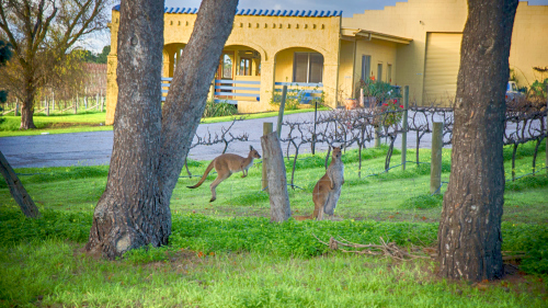 McLaren Vale Winery Experience Tour