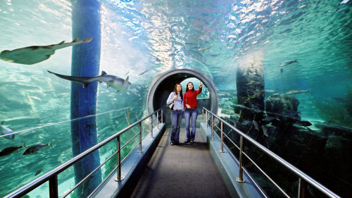 SEA LIFE Melbourne Aquarium & Eureka Skydeck 88 Admission