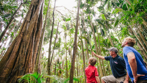 Half-Day 4-Wheel-Drive Tamborine Outback Tracks Tour