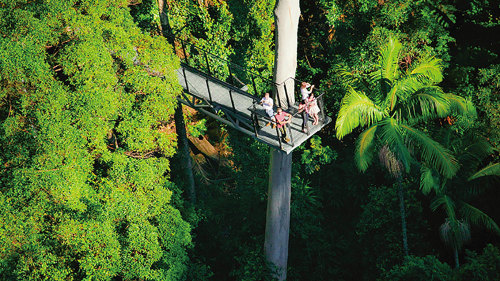 Tamborine Rainforest & Skywalk Day Trip by Australian Day Tours