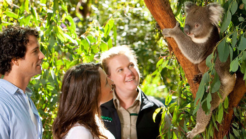 Puffing Billy & Healesville Full-Day Tour by Leadbeater Eco Tours