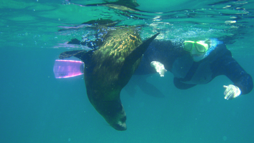 Queenscliff Seal & Dolphin Swim Cruise