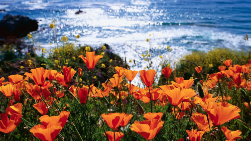California Coastline: Monterey & Carmel by Tower Tours