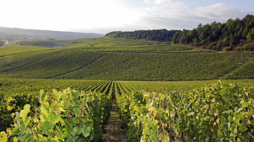 Small-Group Burgundy Region & Chablis Wine Tour