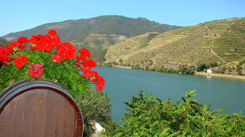 Douro Valley Winetasting Tour with Lunch