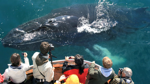 Whale-Watching Half-Day Tour