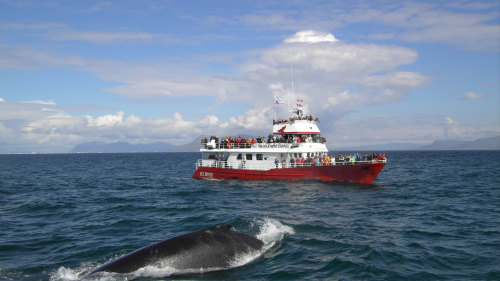 Whale Watching & Golden Circle Full-Day Tour