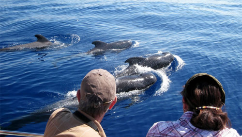Whales & Dolphins Half-Day Tour